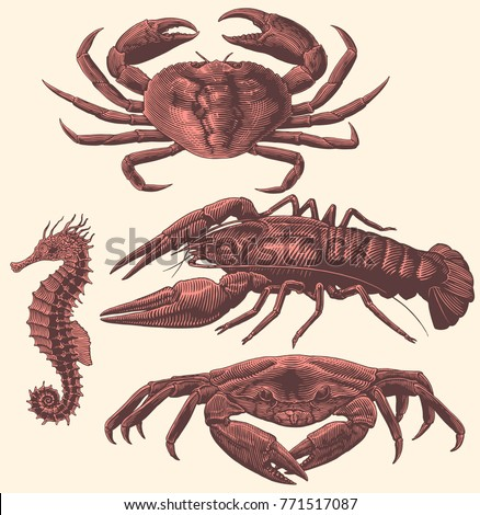 Crabs and crawfish. Design set. Hand drawn engraving. Vector vintage illustration. Isolated on light background. 8 EPS ストックフォト ©