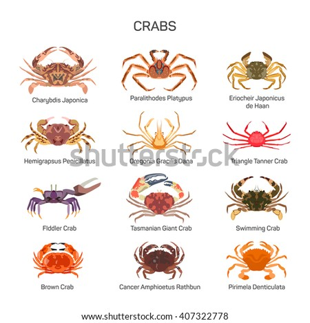 crabs vector set in flat style