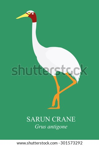 cranes  birds  cartoon vector