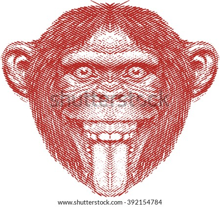 crazy monkey face  chimpanzee