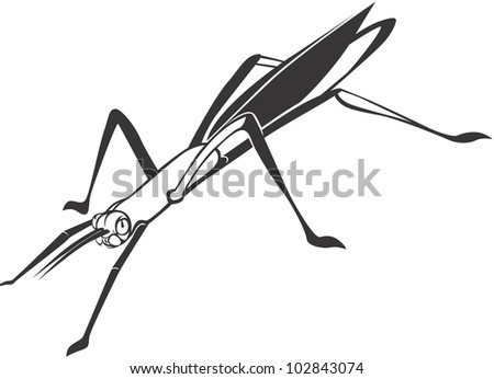 Creative Stick Insect Illustration