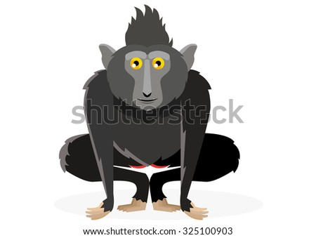 crested black macaque vector