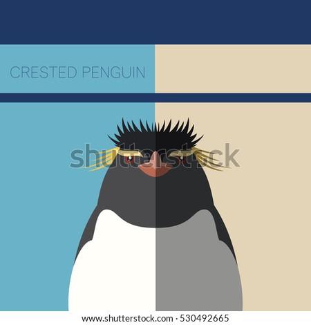crested penguin flat postcard