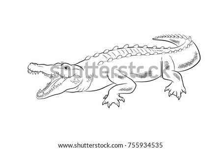 Crocodile Drawing Vector Illustration