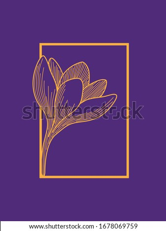 crocus flower in frame design