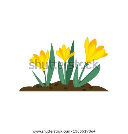 crocuses cartoon illustration