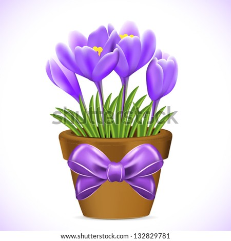 Crocuses flowers in pot on white background. - stock vector