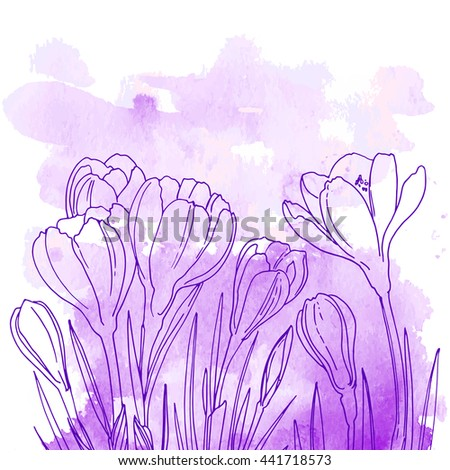 crocuses flowers line drawn on