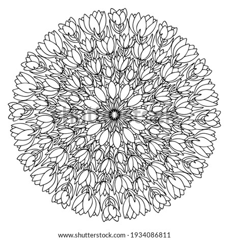 crocuses flowers mandala