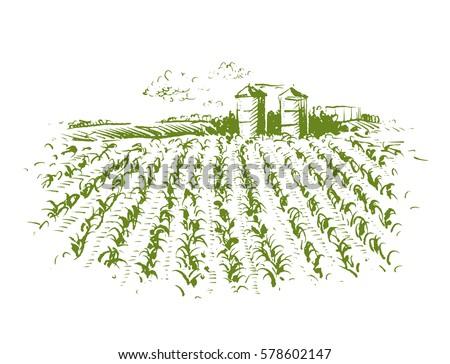 crop field drawing