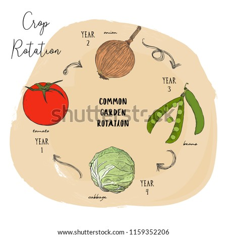 Crop rotation is the practice of growing a series of dissimilar or different types of crops in the same area in sequenced seasons. Hand draw sketch vector crop rotation series.