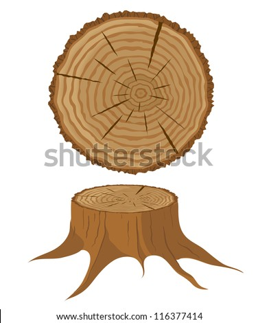 Cross section of tree and stump, vector illustration