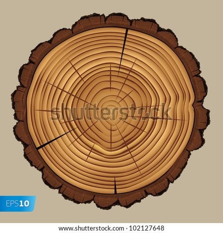 Cross section of tree stump isolated on white background, vector Eps 10 illustration.