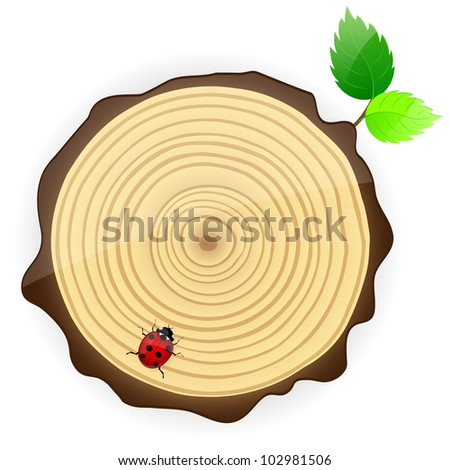 Cross section of tree trunk showing growth rings. Vector illustration.