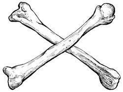 Crossed bones - hand drawn vector illustration, isolated on white