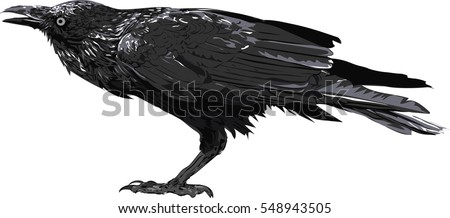 crow art   illustration of the