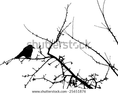 Crow silhouette on the tree branch