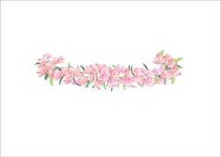 crown pink  flowers isolated on white background,