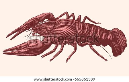 crustacean. hand drawn...