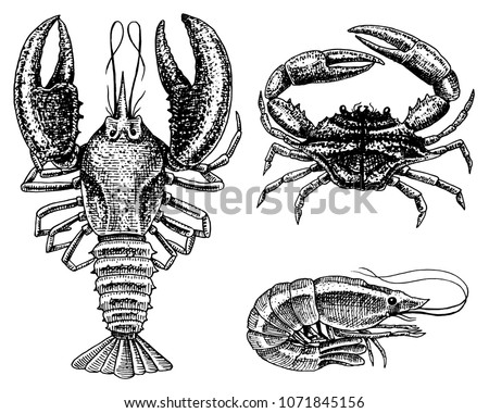 Crustaceans Shrimp Lobster Or Crayfish Crab With Claws River And Lake
