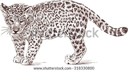 cub of leopard