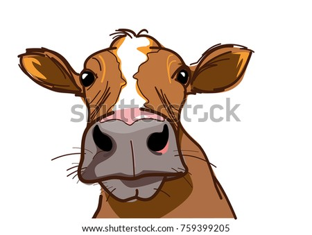 curious cow  looking at you
