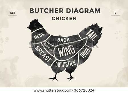 chicken cuts diagram vector download free vector art stock rh vecteezy com Chicken Meat Cuts Diagram Blank Chicken Diagram