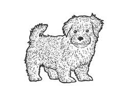 Cute and fluffy puppy. Sketch scratch board imitation. Black and white. Engraving vector illustration.