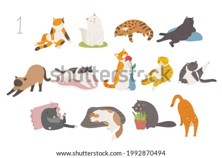 cute and funny cats of various