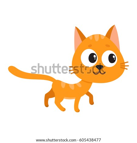 cute and funny orange cat