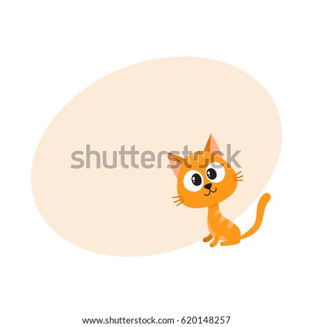 cute and funny red cat