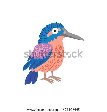 cute animal   common kingfisher