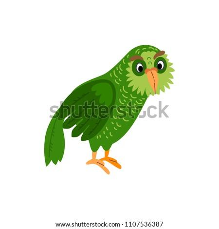 cute animals   kakapo owl