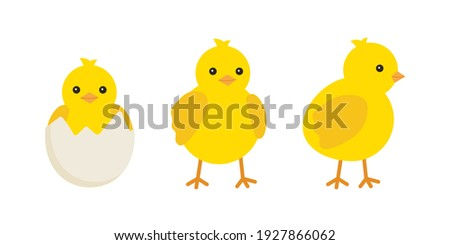 Cute baby chickens set in different poses for easter design. Little yellow cartoon chicks. Vector illustration isolated on white background Stockfoto ©