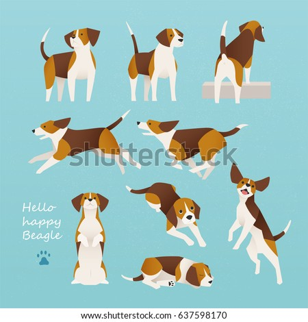cute beagle dog lively actions