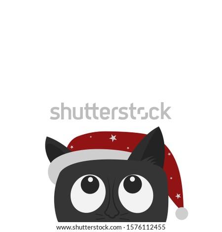 cute black cat in red hat looks