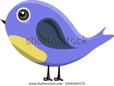 cute blue bird with grey eyes a