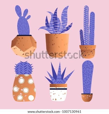 cute cactus in copper pots in