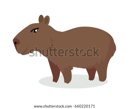 Cute capybara flat vector isolated on white background. South America fauna. Wild animal illustration for zoo ad