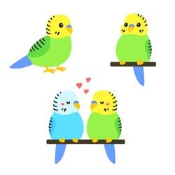 Cute cartoon budgie vector illustration set. Little parakeet bird standing, sitting and couple.