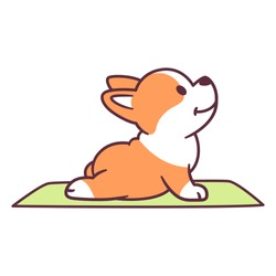 Cute cartoon dog doing yoga. Adorable little corgi puppy in Upward Facing Dog posture (Urdhva Mukha Shvanasana). Funny vector clip art illustration.