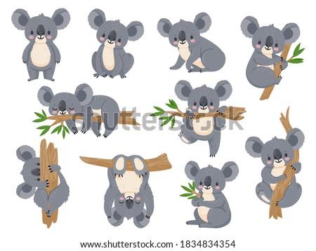Cute cartoon koala. Lazy koalas with eucalyptus. Little funny rainforest animals. Australian bear sleeping on tropical tree vector set. Lazy koala cute and tree eucalyptus, character cartoon wildlife