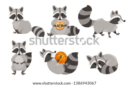 Cute cartoon raccoon set. Funny raccoons collection. Emotion little raccoon. Cartoon animal character design. Flat vector illustration isolated on white background.