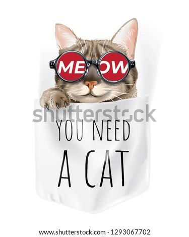 cute cat in sunglasses in shirt