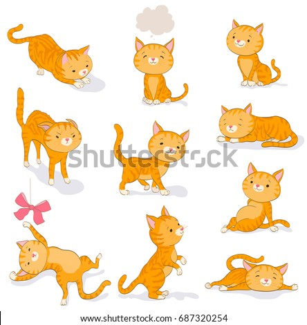 cute cat in various poses