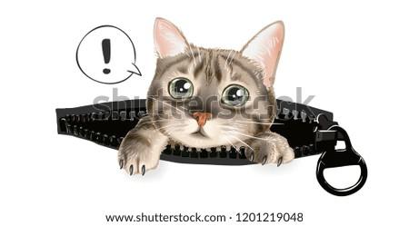 cute cat in zip pocket