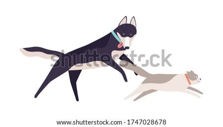 cute cat running away from
