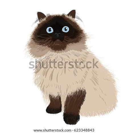 cute cat with blue eyes on
