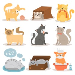 Cute cats character different pose vector set.