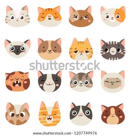 cute cats faces happy animals